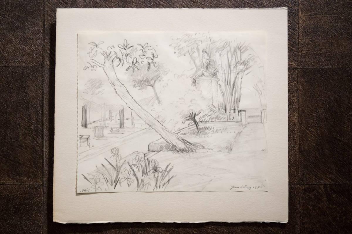 Gérard Diaz  Iris Pencil Drawing