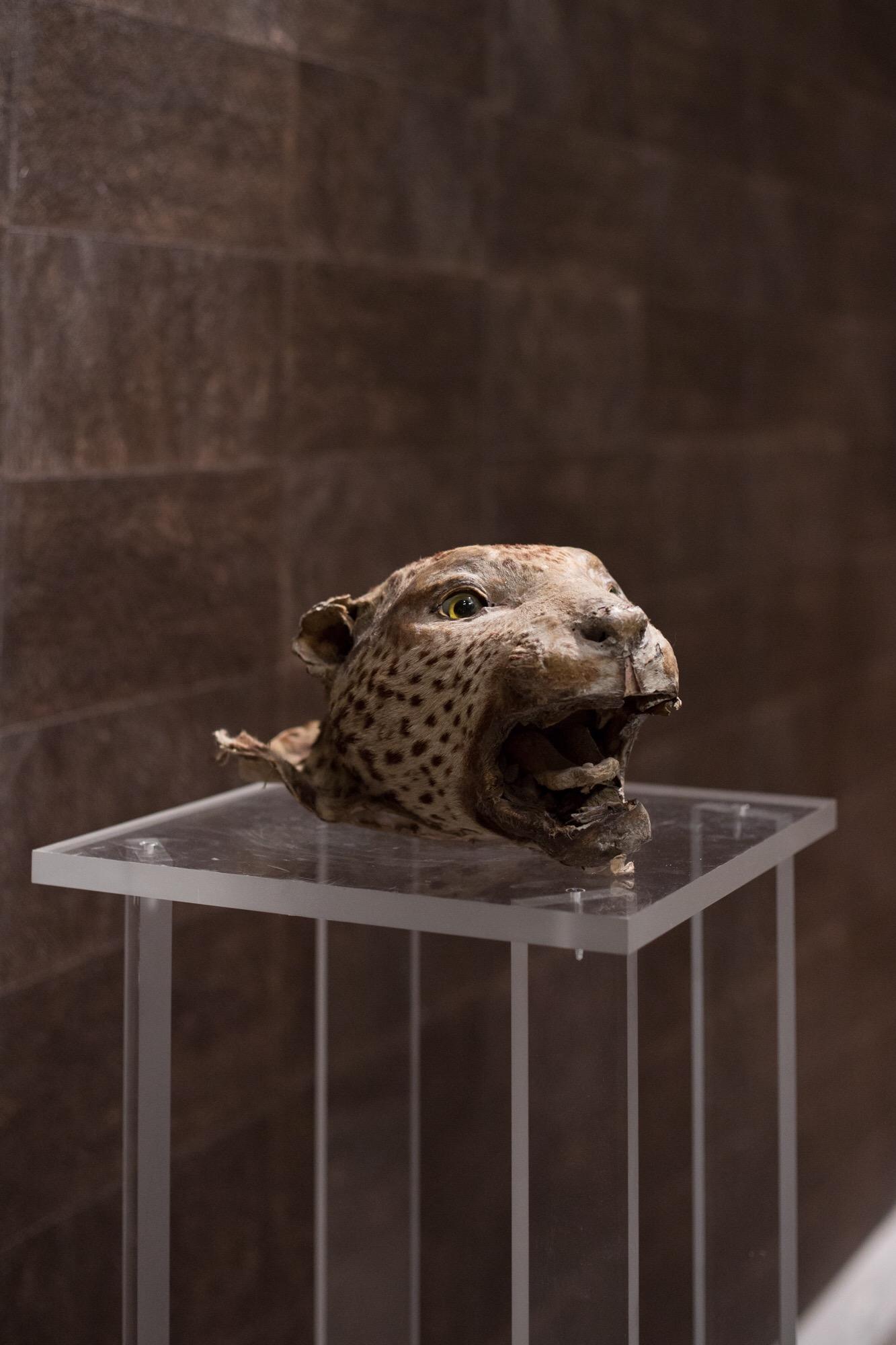 La panthère de Cartier Egidi MadeinItaly